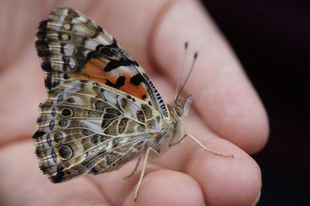 Vlinders in de Tarn