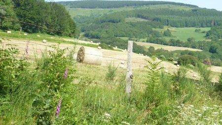 Kamperen op 't Franse platteland camping Domaine Lacanal Nages