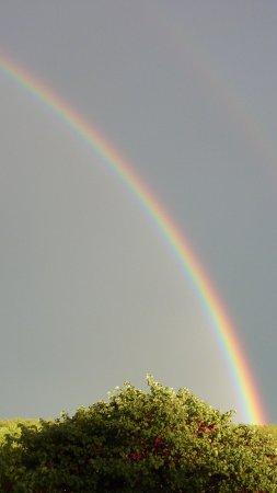 regenboog lacanal