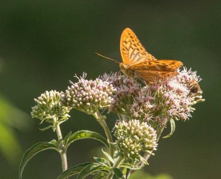 Papillons & Oiseaux